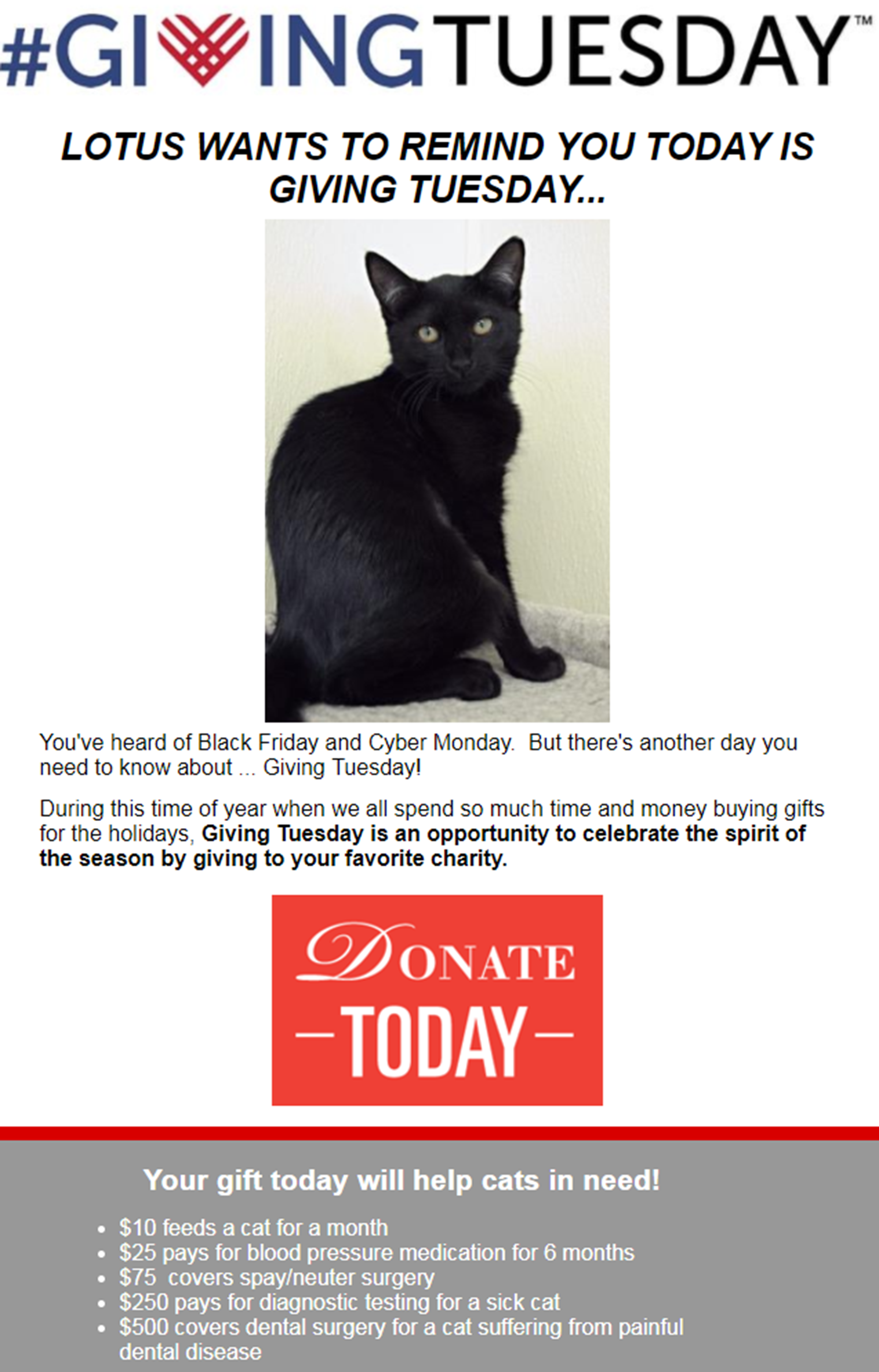 Gifford Cat Shelter Giving Tuesday email campaign example