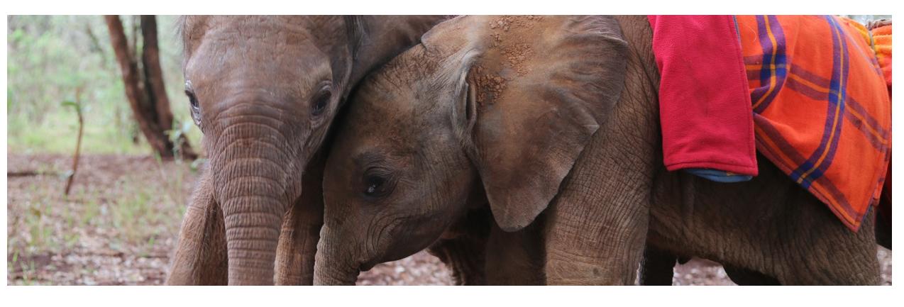 David Sheldrick Wildlife Trust Giving Tuesday Campaign
