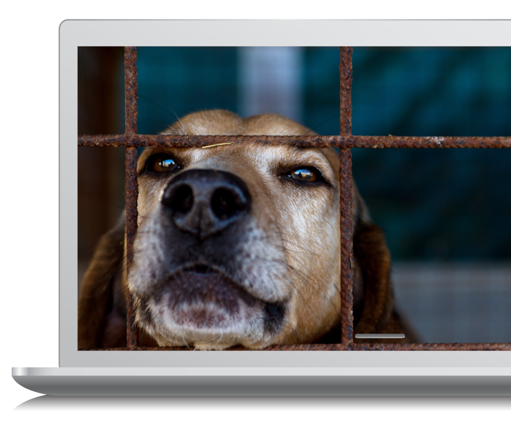 dog picture on laptop
