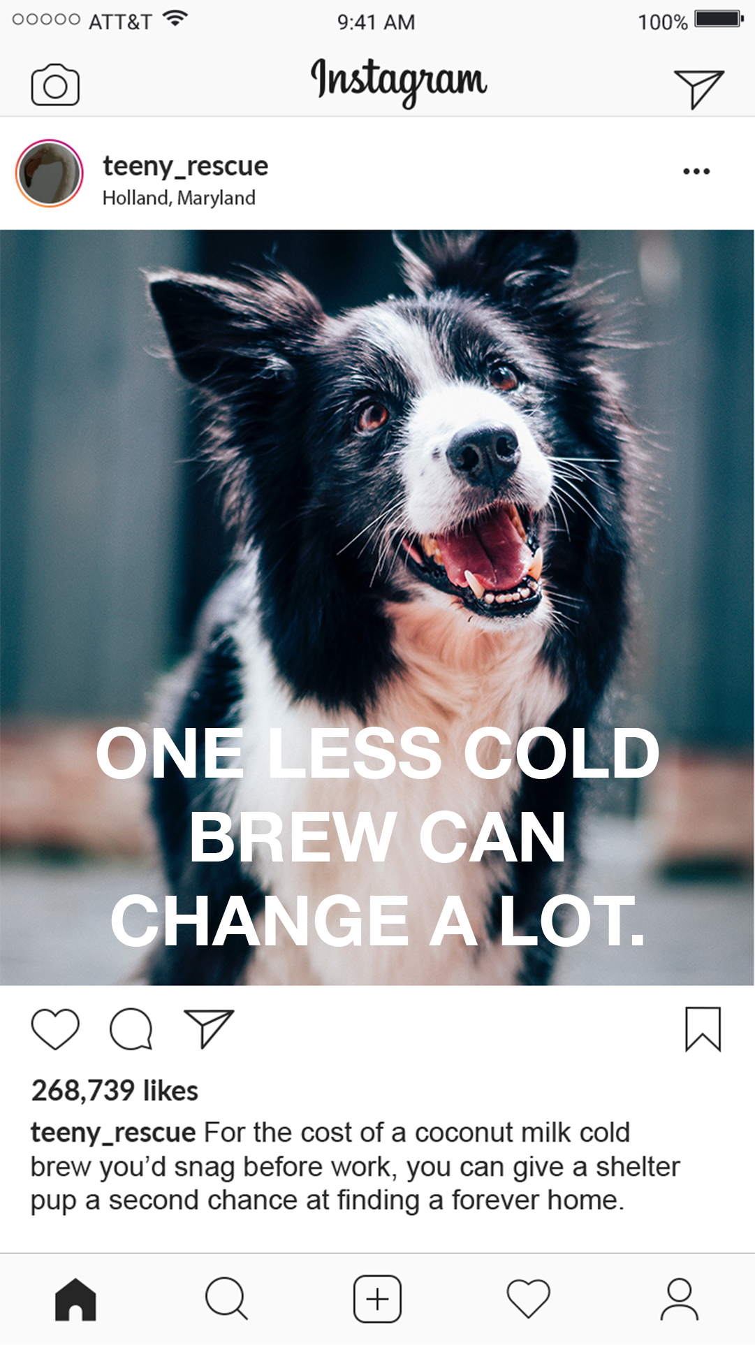 Giving Tuesday Animal Rescure Social Media Example Post