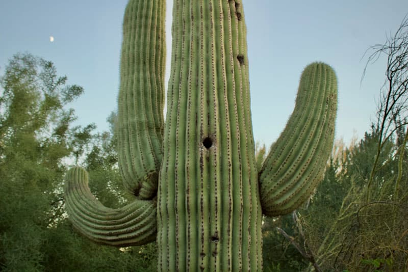 cacti with personality